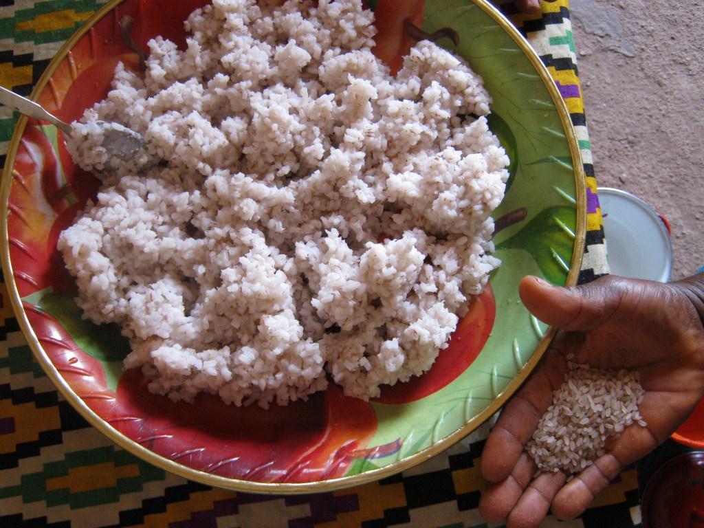 Mountain Lion Ag Rice