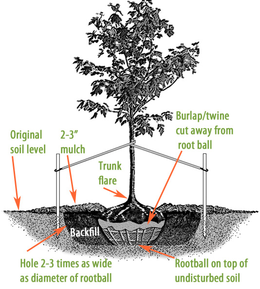 And Best Trees Planting Shade Under