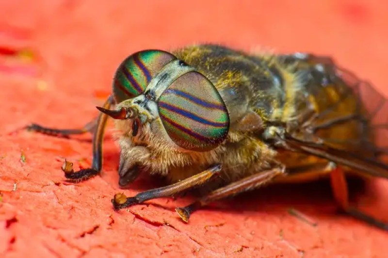 how to photograph insects