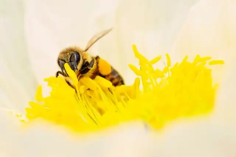 insect on white and yellow flower