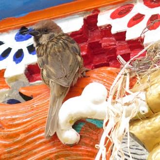 sparrow-5