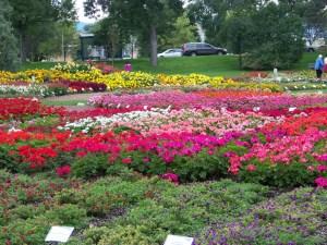 CSU Trial Garden 2014