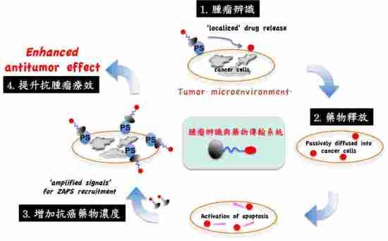 抗癌藥物傳輸系統作用機制。