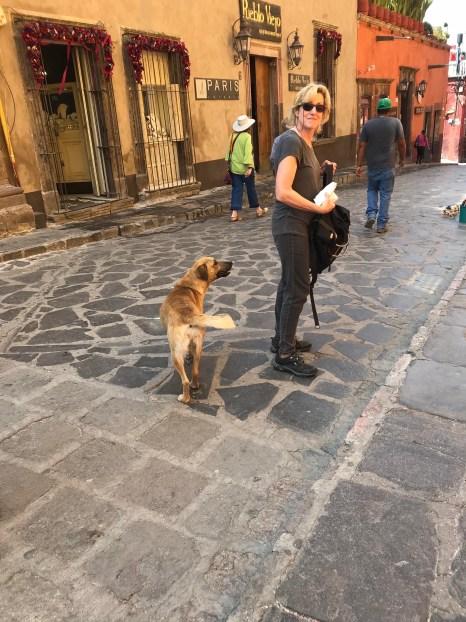 Bobbi photo of dog following pastry