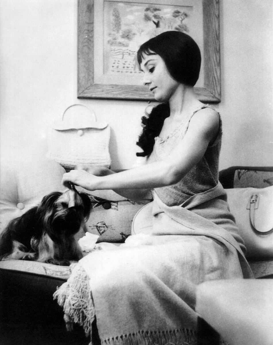audrey putting a bow on her pet