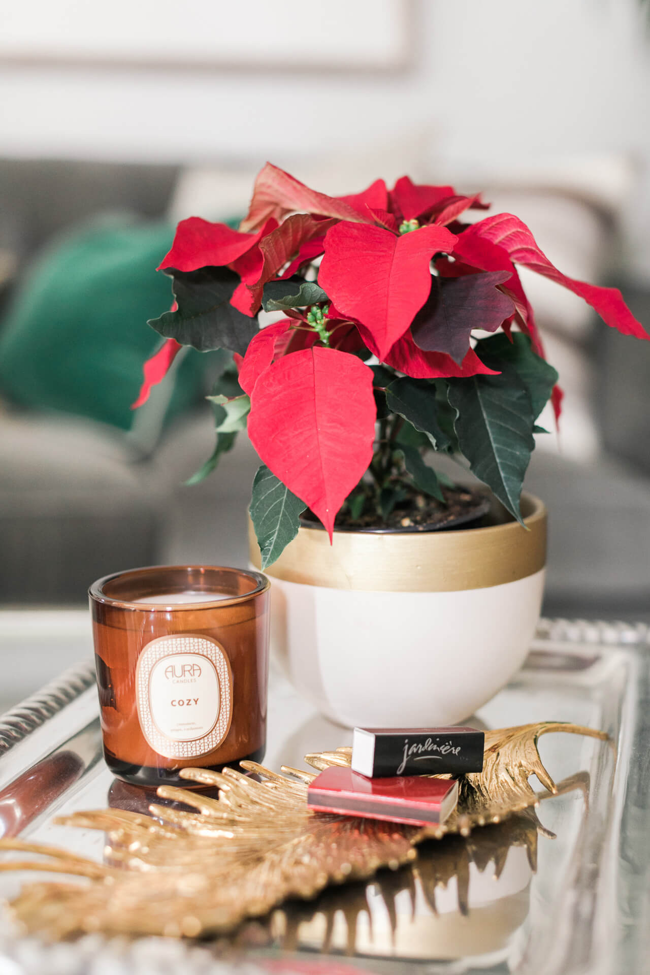 fill home with poinsettias
