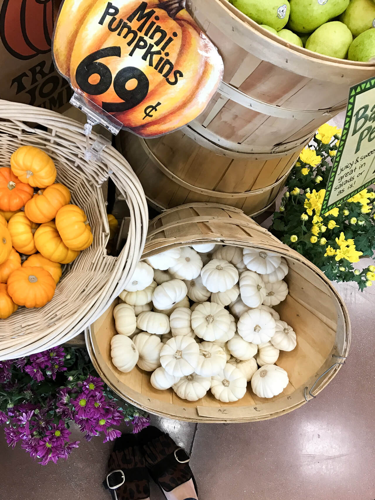 love these trader joes mini pumpkins