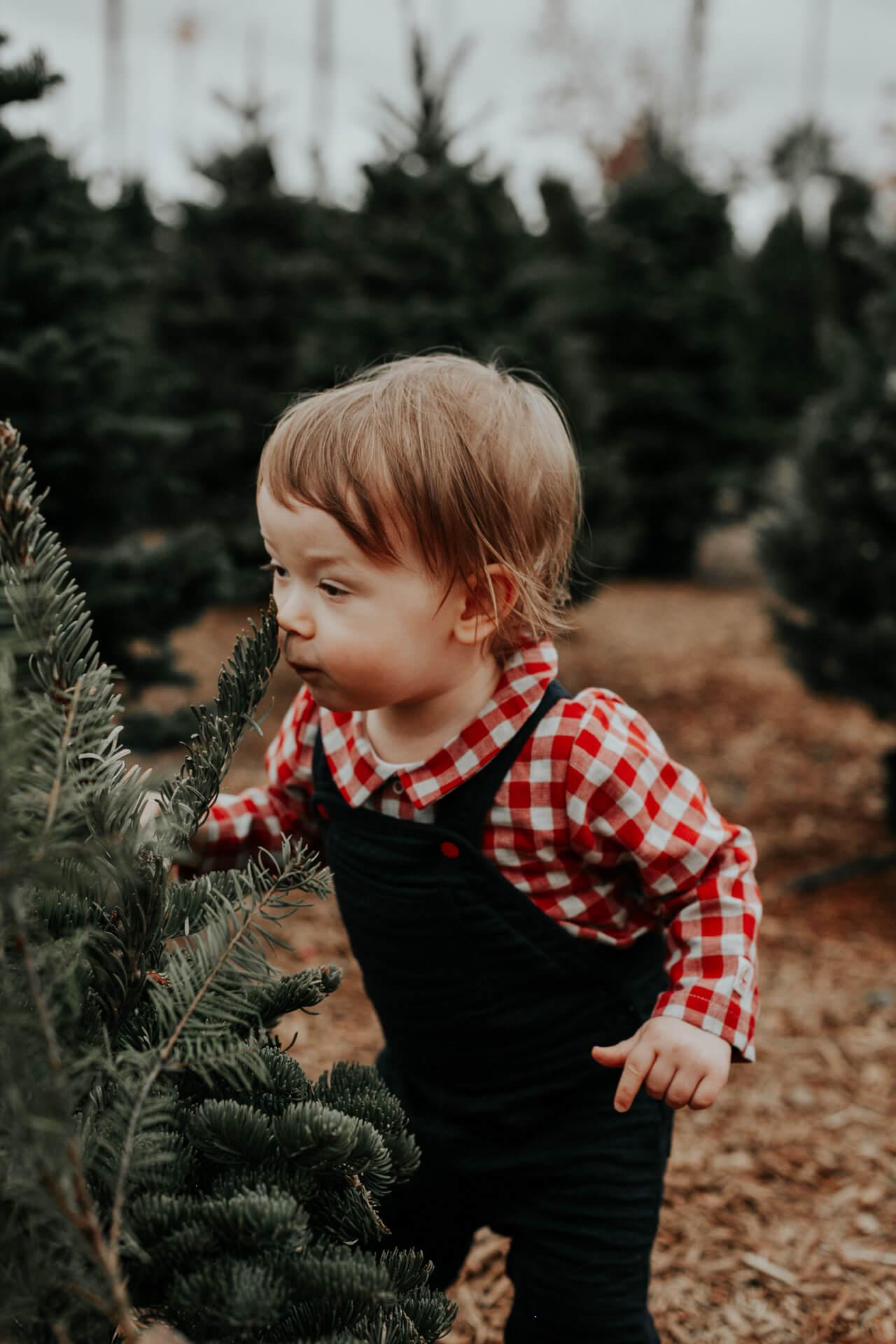 Augustine loves smelling Christmas trees - M Loves M @marmar