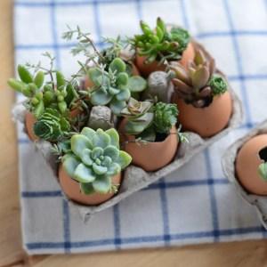 How to DIY a eggshell terrariums! | M Loves M @marmar