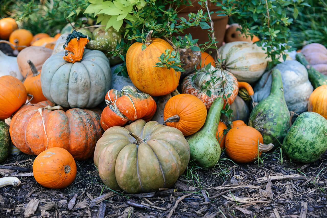 The Pumpkin Village in Dallas Texas is too cute! - M Loves M @marmar