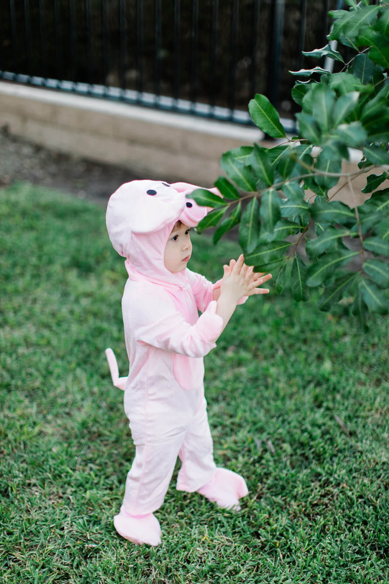 Love our cute little baby pig Halloween costume! - M Loves M @marmar