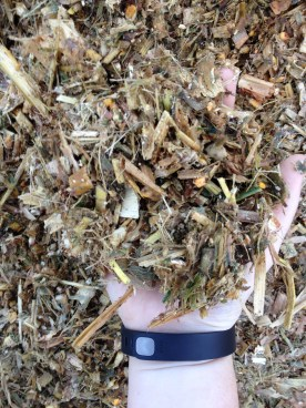 Close up of silage. See the bits of green leaves?