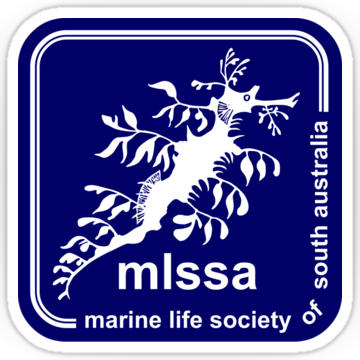 MLSSA logo sticker classic