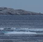 Island between Hanson Bay and Cape Younghusband, Kangaroo Island