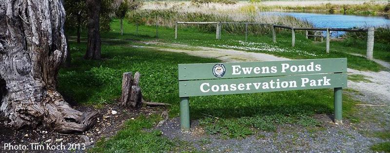 Ewens Ponds Conservation Park 2013 Tim Koch
