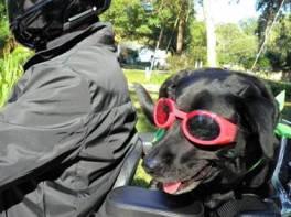 Cruising with Daddy on a Sunday Safari