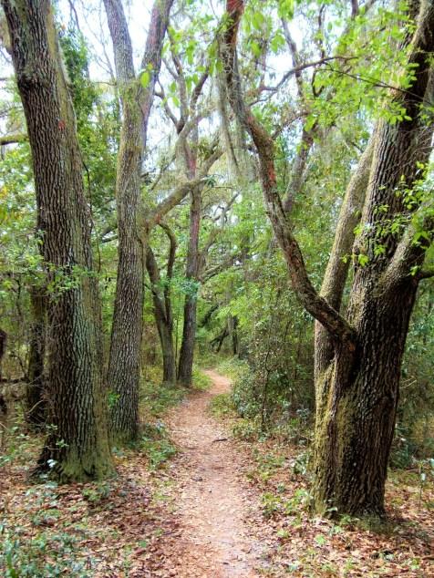 Like Sherwood Forest