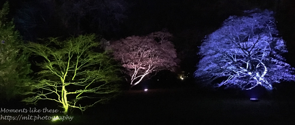 Westonbirt lights up – 5