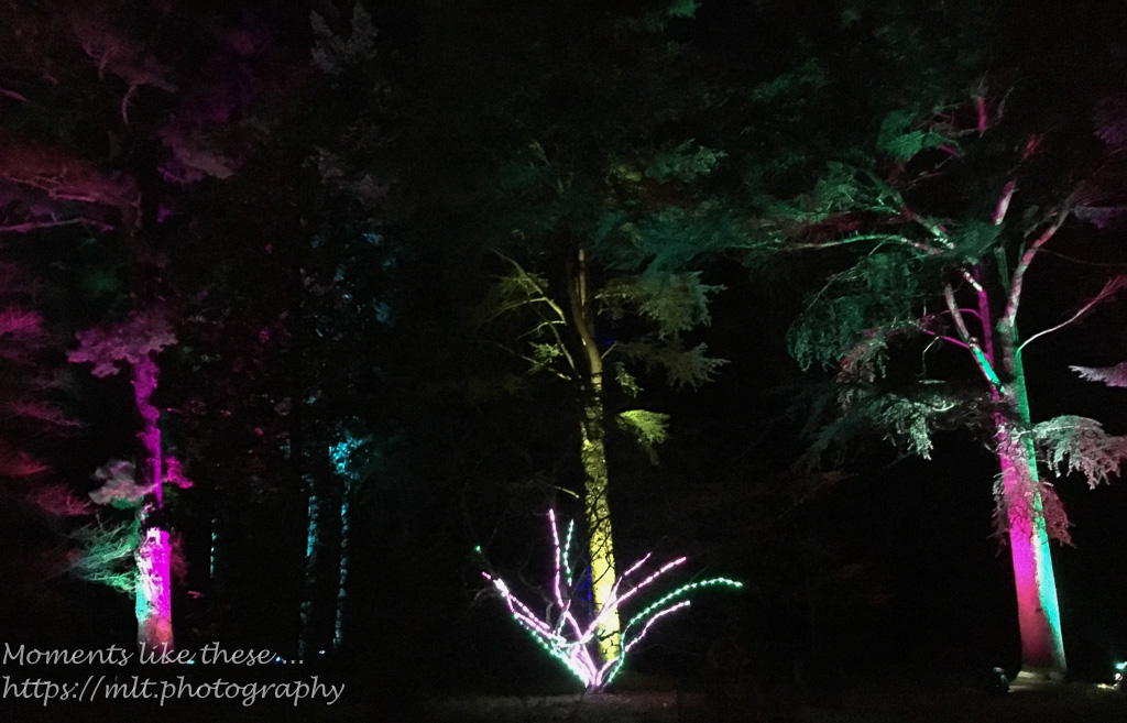 Westonbirt lights up – 4