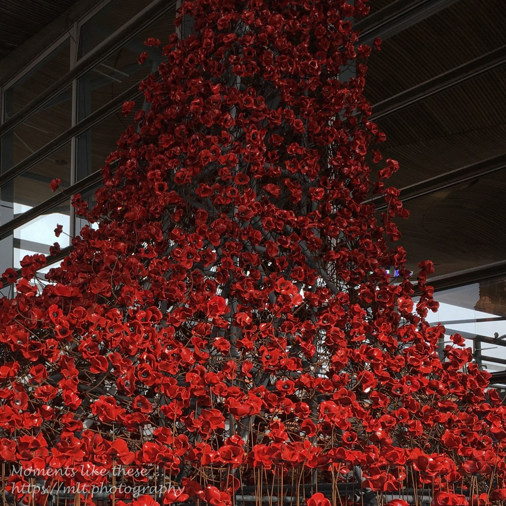 Waterfall of poppies
