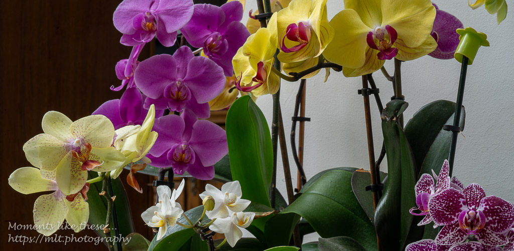 A wonderful show of orchids