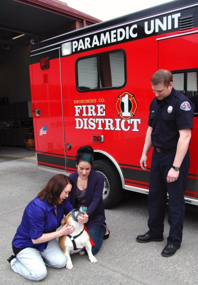 Veterinarian Dr. Cherie Guidry and veterinary technician Aubrey Gabbard of Helping Hands Veterinary Clinic in Lynnwood show Firefighter Kelly Geiger of Fire District 1 how to fit a pet oxygen mask on a bulldog named Sadie. Helping Hands Veterinary Clinic donated four pet oxygen masks to Fire District 1.