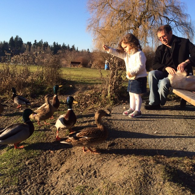 On a spring-like day, Sharif and his friend's daughter Janah feed the ducks at Lake Ballinger Saturday afternoon. (Photo by David Carlos)