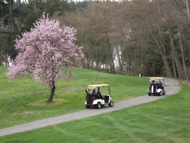 Spring has sprung in Mountlake Terrace, as announced by the flowering cherry trees at the Nile Golf Course. Sunday's high temperature in Mountlake Terrace was 60 degrees; Monday's high is expected to reach into the mid-60s. (Photo by Doug Petrowski)