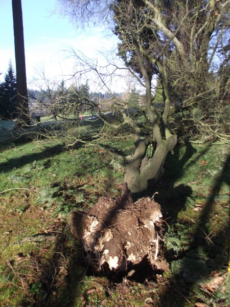 Damage from Dec. 11 windstorm 017