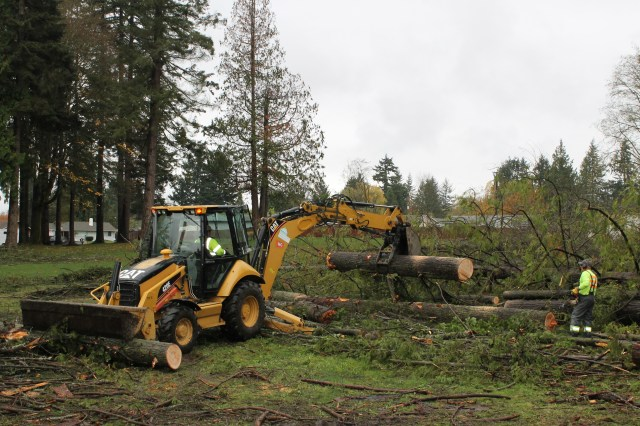 Work crews are falling trees and stacking the trunks in preparation of the trees' removal from the park.