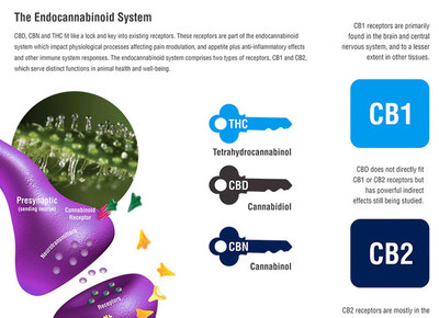 How CBD Works with your Body