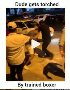 Dude Gets Torched By A Trained Boxer In Street Fight In Mexico (Or Another Latin American Country)