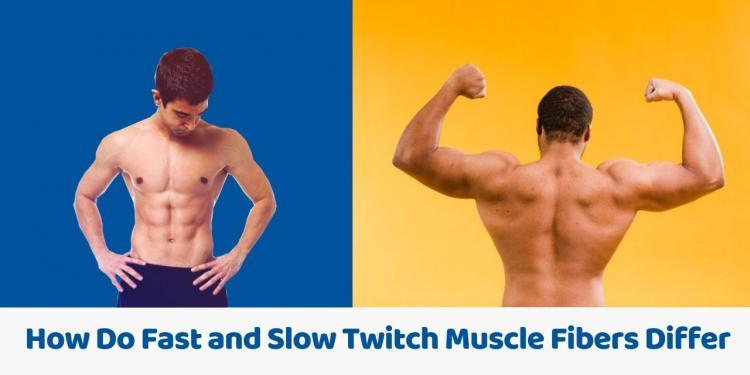 How Do Fast and Slow Twitch Muscle Fibers Differ