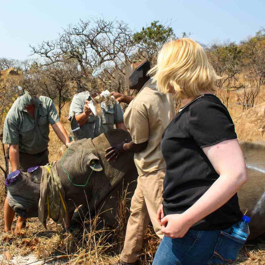 Südafrika: Eine legale Nashorn-Enthornung zum Schutz vor Wilderern