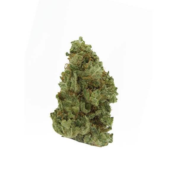 Acapulco Gold - Sativa