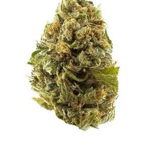 Special K - Indica dominant hybrid