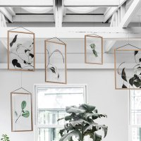 Transparent Botanical Prints