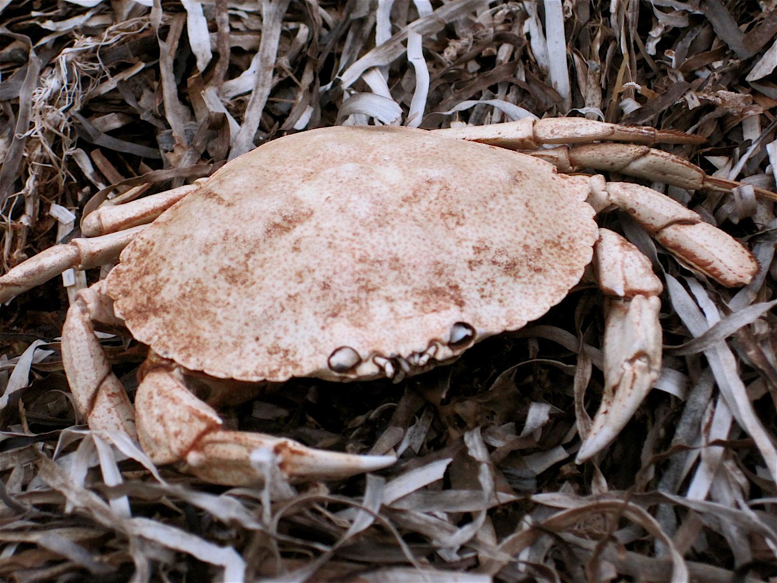 Crabtastic