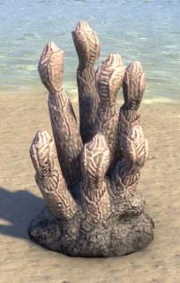 Coral Formation, Pillar Polyps