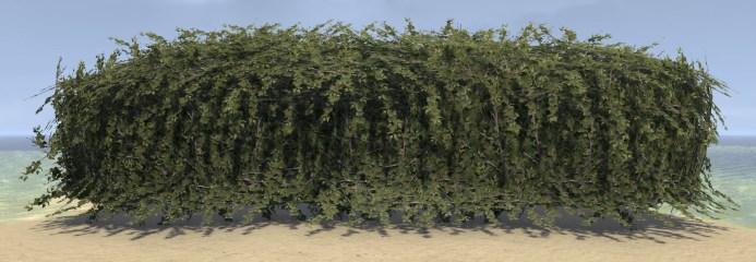 Hedge, Overgrown Long