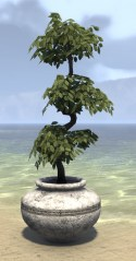 High Elf Potted Plant, Triple Tiered