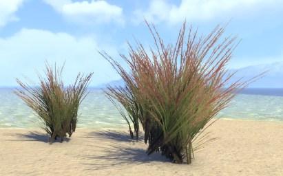 Plants, Redtop Grass Tuft