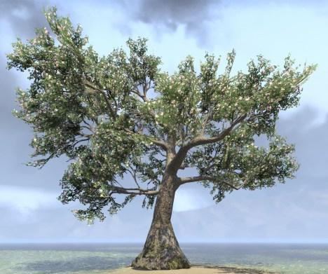 Tree, Ancient Blooming Gingko