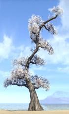 Tree, Cloud White