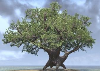 Tree, Shade Ancient
