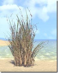 Plant, Bramblebrush 1
