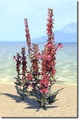 Plant Cluster, Cardinal Flower Large 1
