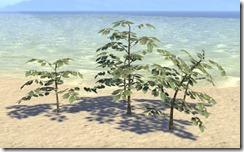 Plant Cluster, Marsh Saplings 1