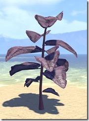 Plant, Purple Spadeleaf 1