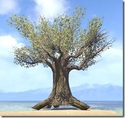 Tree , Ancient Banyan 1